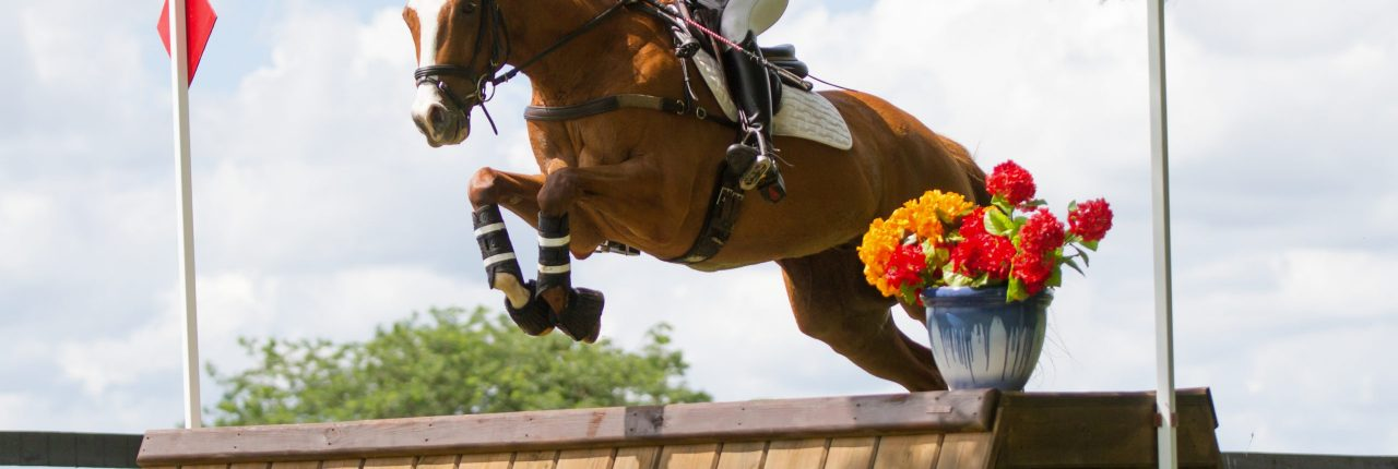 cross country, chestnut, eventing