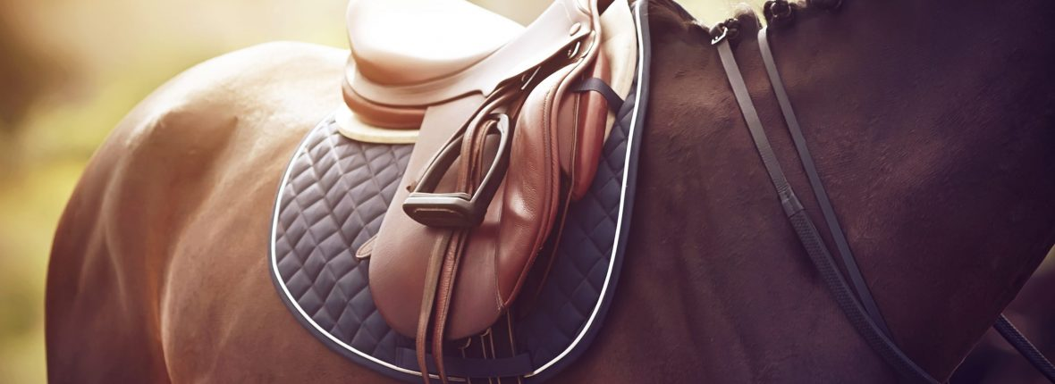On a strong Bay horse, whose mane is tied in pigtails, a saddle is worn on the back to perform at equestrian competitions in the summer Sunny time.