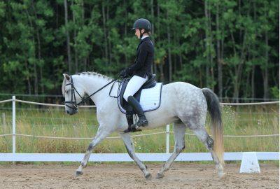 Kent & Masters Saddles